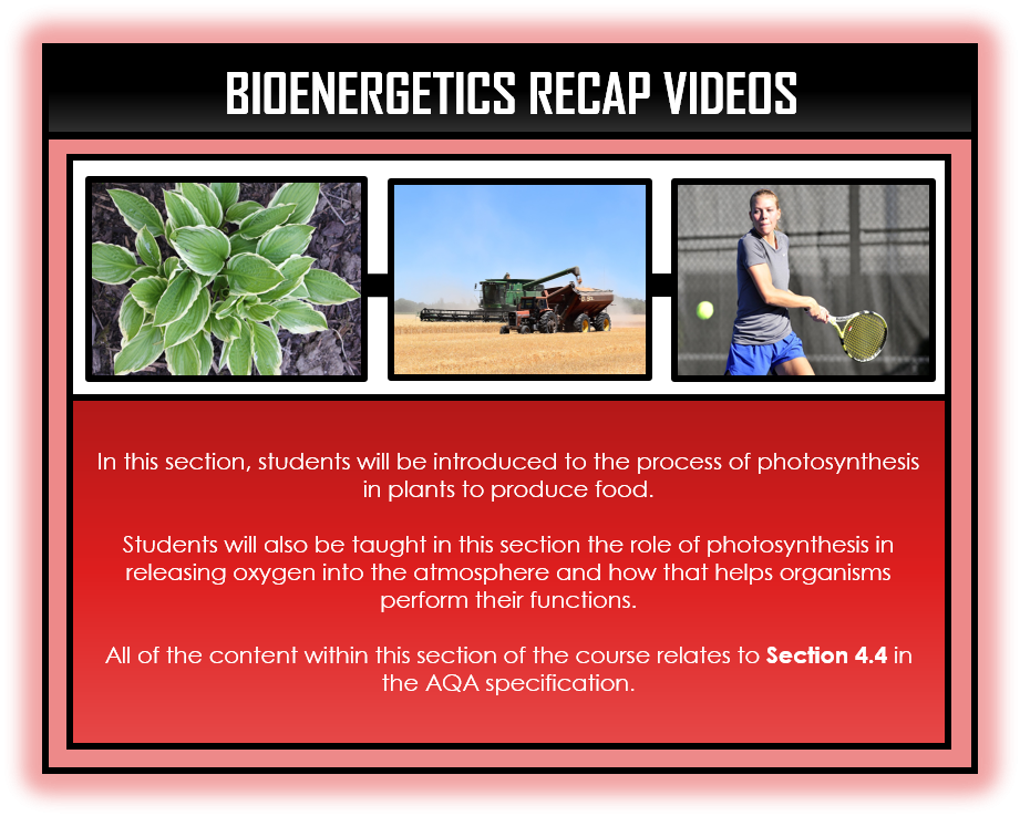 Biology Snapshots - Bioenergetics Section
